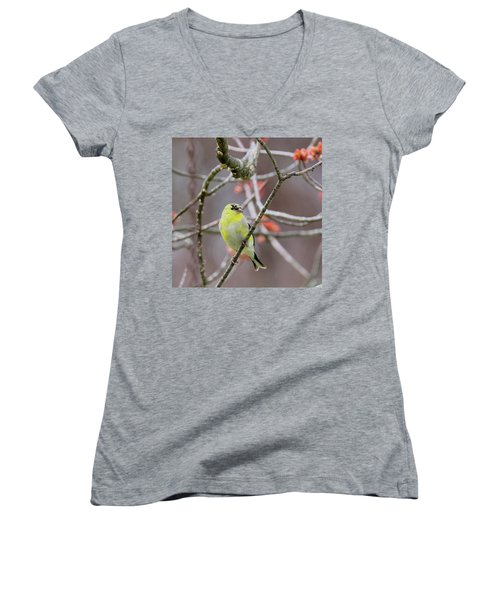 Women's V-Neck T-Shirt (Junior Cut) featuring the photograph Molting Gold Finch Square by Bill Wakeley