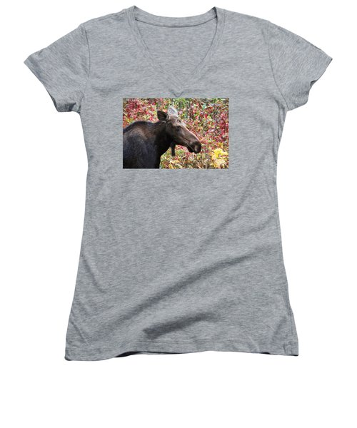 Women's V-Neck T-Shirt (Junior Cut) featuring the photograph Moose And Fall Leaves by Peggy Collins
