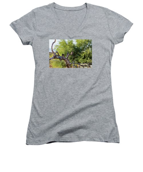 Mourning Dove In Old Tree Women's V-Neck