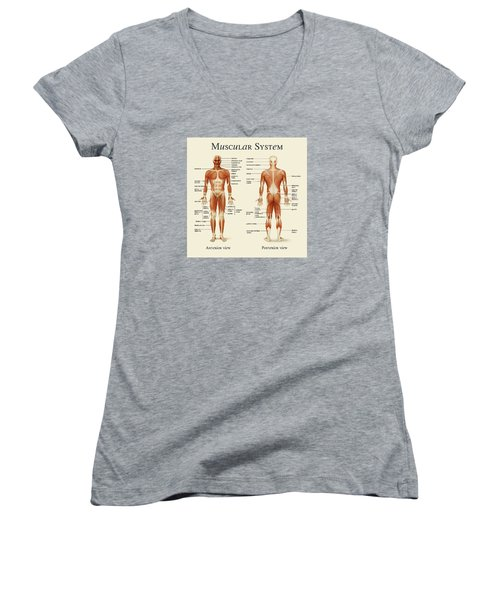 Women's V-Neck T-Shirt (Junior Cut) featuring the photograph Muscular System by Gina Dsgn