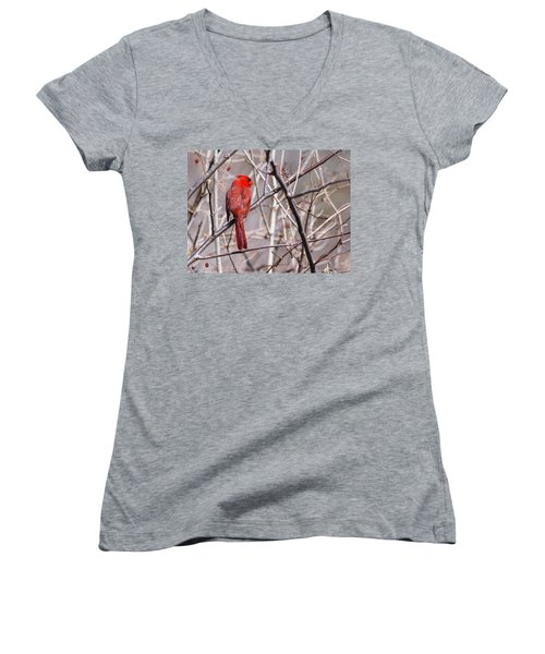 Northern Cardinal In The Sun Women's V-Neck T-Shirt (Junior Cut) by Edward Peterson