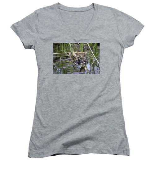 Northern Waterthrush Women's V-Neck T-Shirt