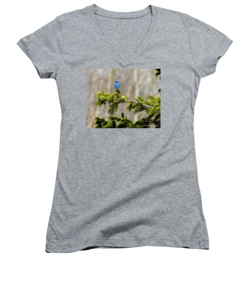 Notice The Pretty Bluebird Women's V-Neck T-Shirt (Junior Cut) by Yeates Photography