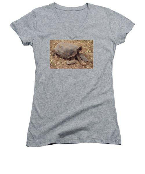 Old Tortoise Women's V-Neck T-Shirt (Junior Cut) by Will Burlingham