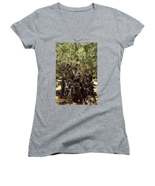 Women's V-Neck featuring the photograph Olive Tree by Mae Wertz