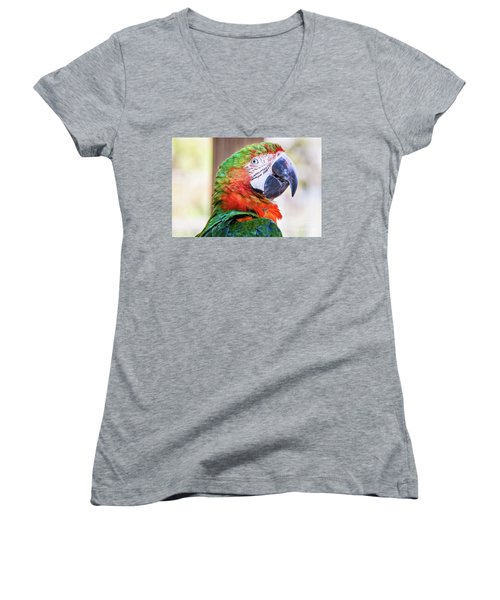 Parrot Women's V-Neck T-Shirt (Junior Cut) by Stephanie Hayes