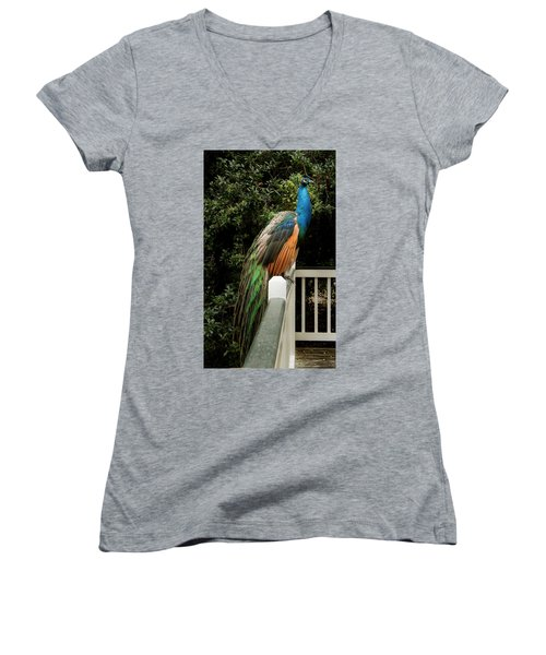 Women's V-Neck T-Shirt (Junior Cut) featuring the photograph Peacock On A Fence by Jean Noren
