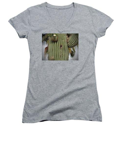 Peek-a-boo Cactus Wren Women's V-Neck (Athletic Fit)