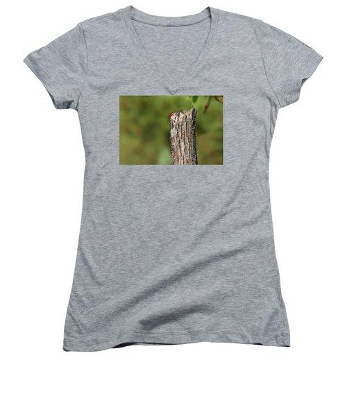 Peek A Boo Pileated Woodpecker Women's V-Neck T-Shirt