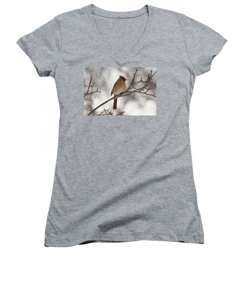 Perched Female Red Cardinal Women's V-Neck T-Shirt (Junior Cut) by Debbie Oppermann