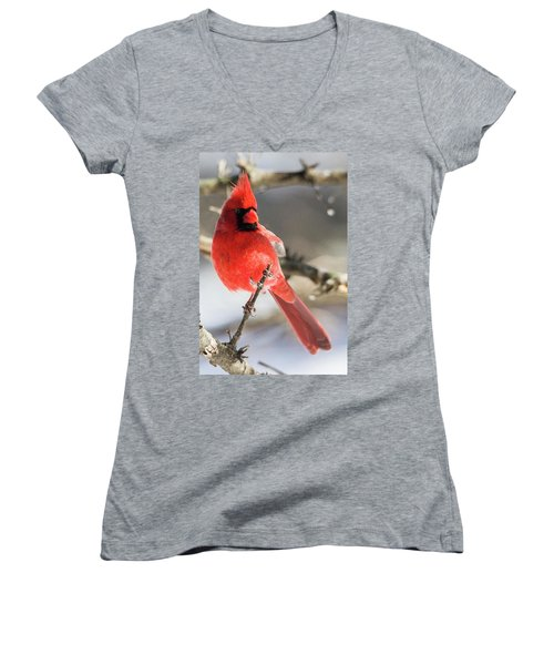 Perching Mister Cardinal Women's V-Neck (Athletic Fit)