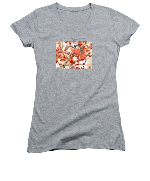 Pine Grosbeak Women's V-Neck T-Shirt (Junior Cut) by Debbie Stahre