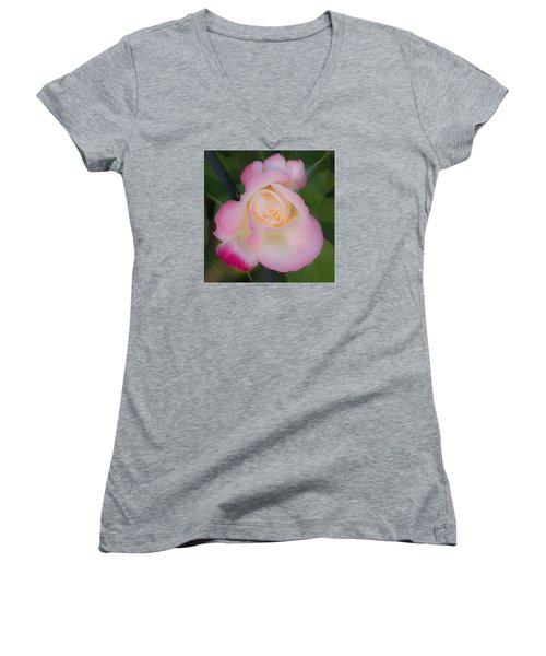 Pink Tinged Rose Women's V-Neck T-Shirt (Junior Cut) by Cathy Donohoue
