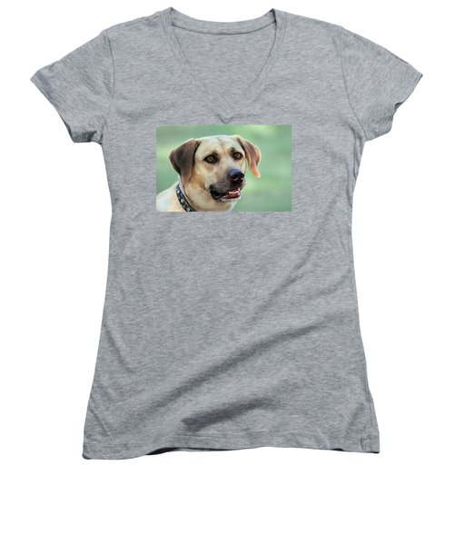 Portrait Of A Yellow Labrador Retriever Women's V-Neck
