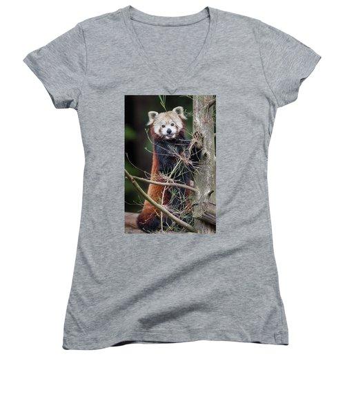 Portrat Of A Content Red Panda Women's V-Neck T-Shirt (Junior Cut) by Greg Nyquist