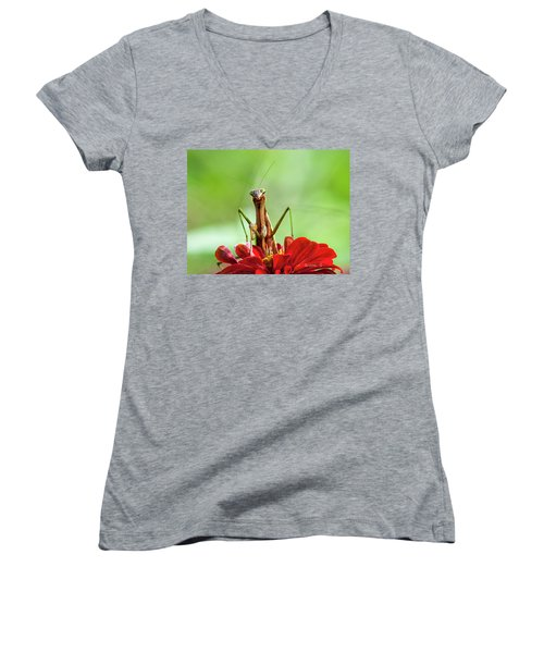 Praying Mantis On Zinnia Women's V-Neck T-Shirt