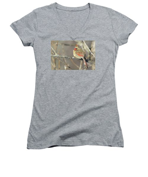 Pretty Female Cardinal Women's V-Neck T-Shirt (Junior Cut) by Brook Burling