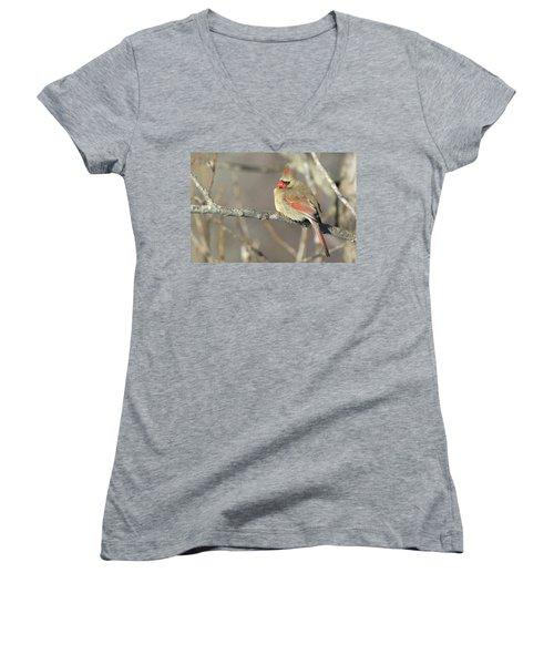 Pretty Female Cardinal Women's V-Neck T-Shirt