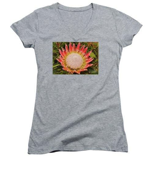 Protea I Women's V-Neck T-Shirt (Junior Cut) by Cassandra Buckley