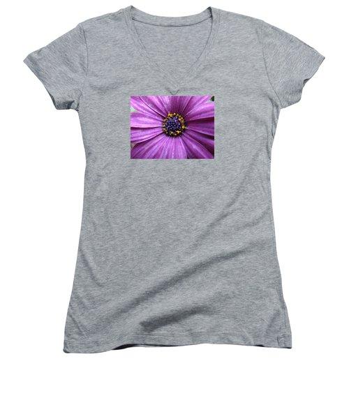Purple African Daisy Women's V-Neck T-Shirt