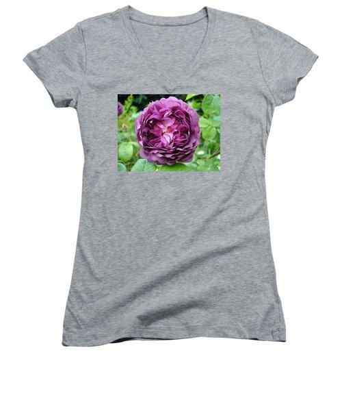Purple English Rose Women's V-Neck T-Shirt