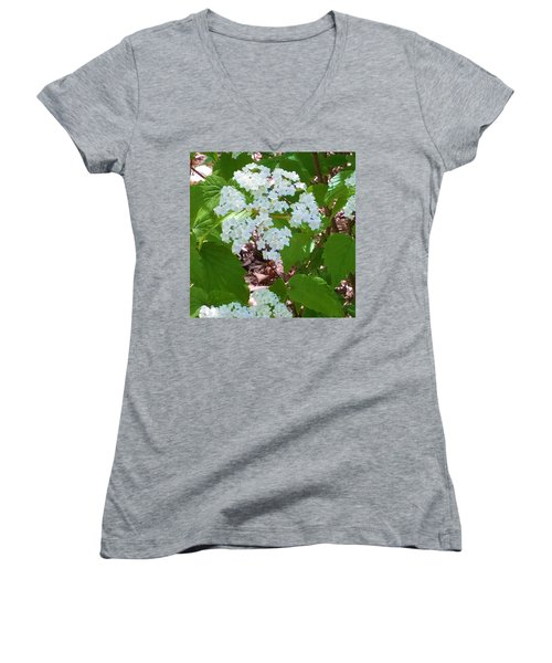 Queen Anne's Lace Women's V-Neck T-Shirt (Junior Cut) by Kay Gilley