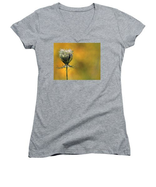 Queen Anne's Lace Stony Brook New York Women's V-Neck T-Shirt (Junior Cut) by Bob Savage