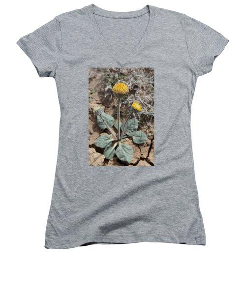 Rayless Daisy Women's V-Neck T-Shirt