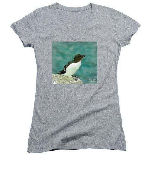 Razorbill Women's V-Neck T-Shirt (Junior Cut) by Nick Eagles