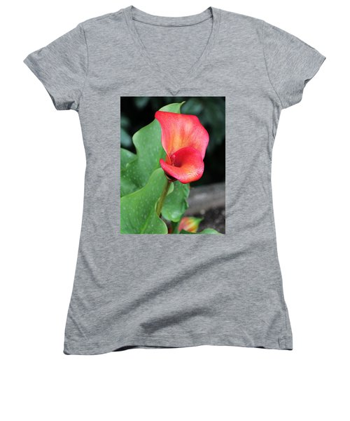 Women's V-Neck T-Shirt (Junior Cut) featuring the photograph Red Calla Lily by Katie Wing Vigil