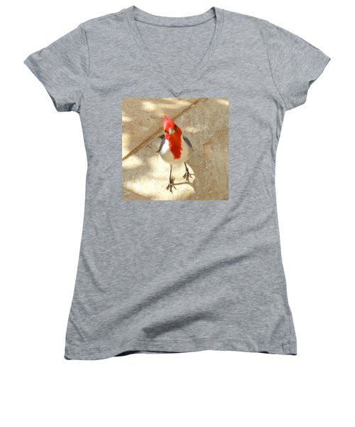 Red-crested Cardinal At My Feet Women's V-Neck