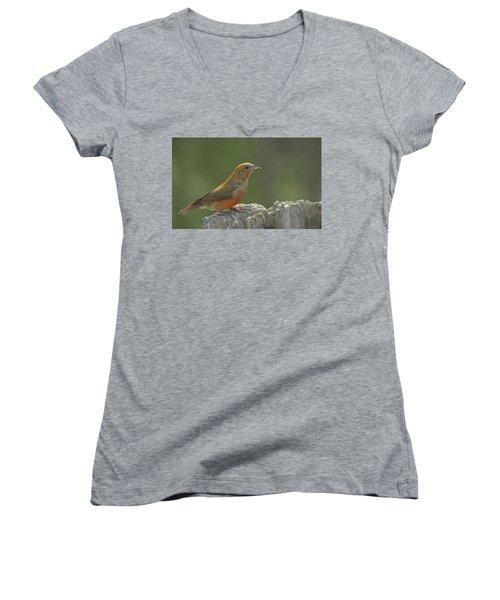 Red Crossbill Women's V-Neck T-Shirt