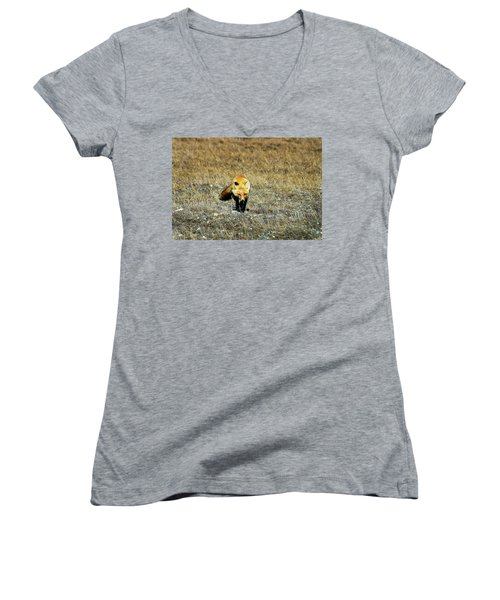 Women's V-Neck T-Shirt (Junior Cut) featuring the photograph Red Fox On The Tundra by Anthony Jones