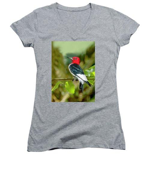 Red-headed Woodpecker Portrait Women's V-Neck