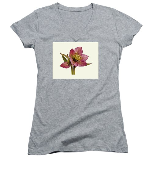 Women's V-Neck T-Shirt (Junior Cut) featuring the photograph Red Hellebore Cream Background by Paul Gulliver
