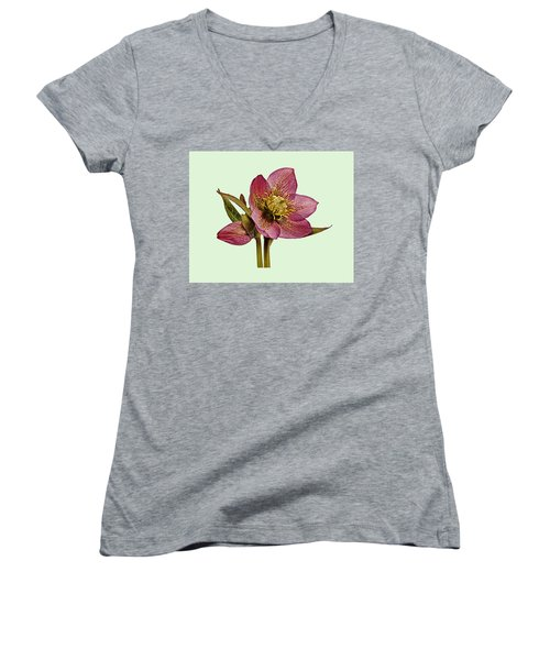 Women's V-Neck T-Shirt (Junior Cut) featuring the photograph Red Hellebore Green Background by Paul Gulliver