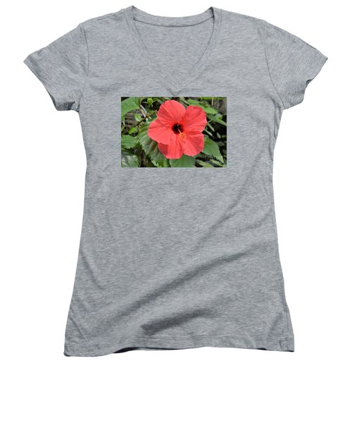 Red Hibiscus Women's V-Neck