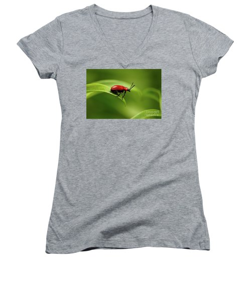 Red Scarlet Lily Beetle On Plant Women's V-Neck T-Shirt (Junior Cut) by Sergey Taran