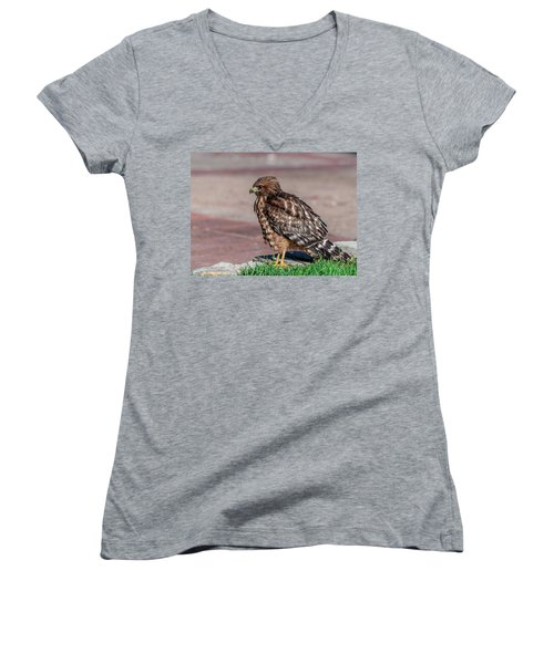 Red-shouldered Hawk Women's V-Neck (Athletic Fit)