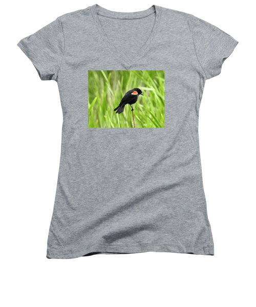 Red-winged Blackbird Women's V-Neck T-Shirt (Junior Cut) by Brian Chase