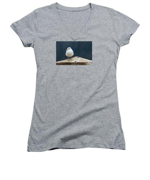 Ring Bill Women's V-Neck T-Shirt (Junior Cut) by Joe Scott