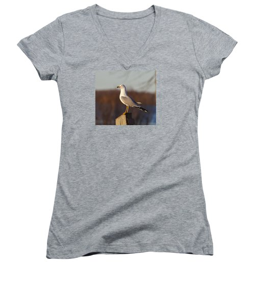 Ring Billed Gull Women's V-Neck (Athletic Fit)
