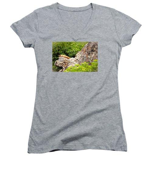 Rock Chuck Women's V-Neck T-Shirt (Junior Cut) by Lana Trussell