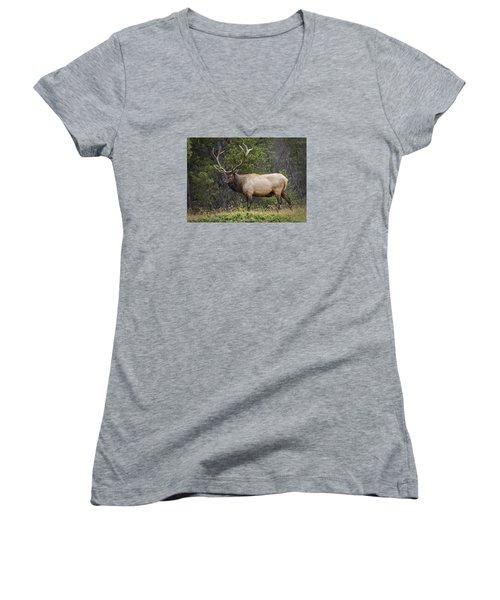 Rocky Mountain National Park Bull Elk Women's V-Neck T-Shirt (Junior Cut) by John Vose