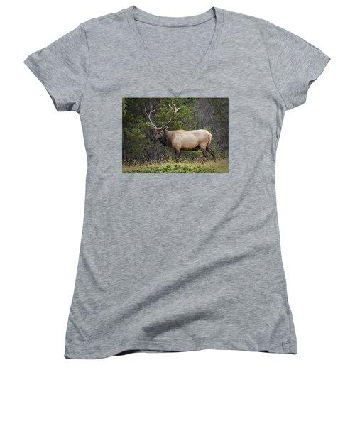 Rocky Mountain National Park Bull Elk Women's V-Neck