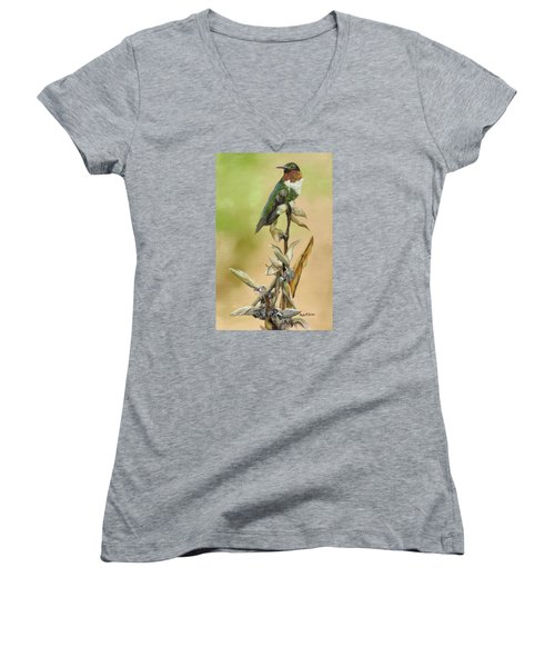 Women's V-Neck T-Shirt (Junior Cut) featuring the painting Ruby Throated Hummingbird Study by Phyllis Beiser