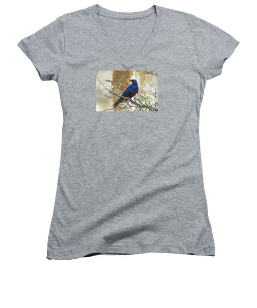 Women's V-Neck T-Shirt (Junior Cut) featuring the photograph Ruppels Glossy Starling by Pravine Chester