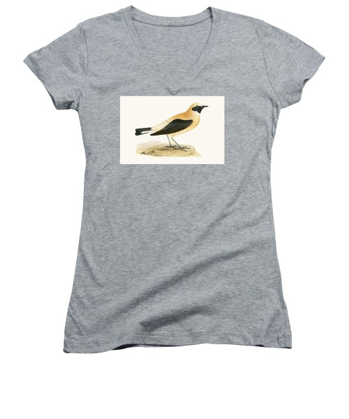Russet Wheatear Women's V-Neck T-Shirt (Junior Cut) by English School
