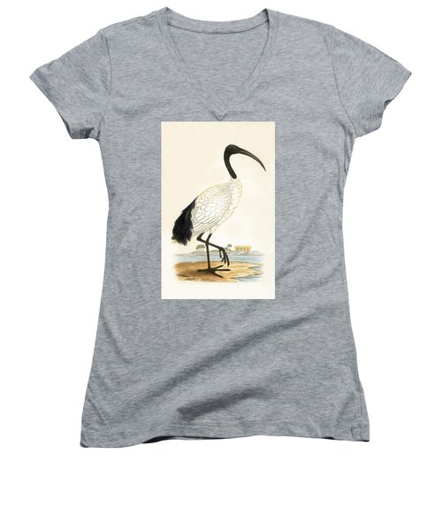 Sacred Ibis Women's V-Neck T-Shirt (Junior Cut) by English School