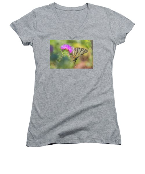 Scarce Swallowtail - Iphiclides Podalirius Women's V-Neck (Athletic Fit)